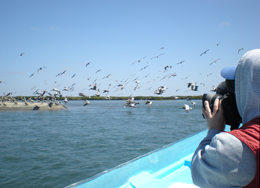 xCREW Photographer Kevin Ely shooting brown pelicans coming in for a landing at Lopez Mateos photo Michael Harris