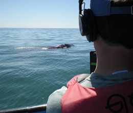 xCREW Photographer Kevin Ely shooting surfacing mother whale2 photo Michael Harris